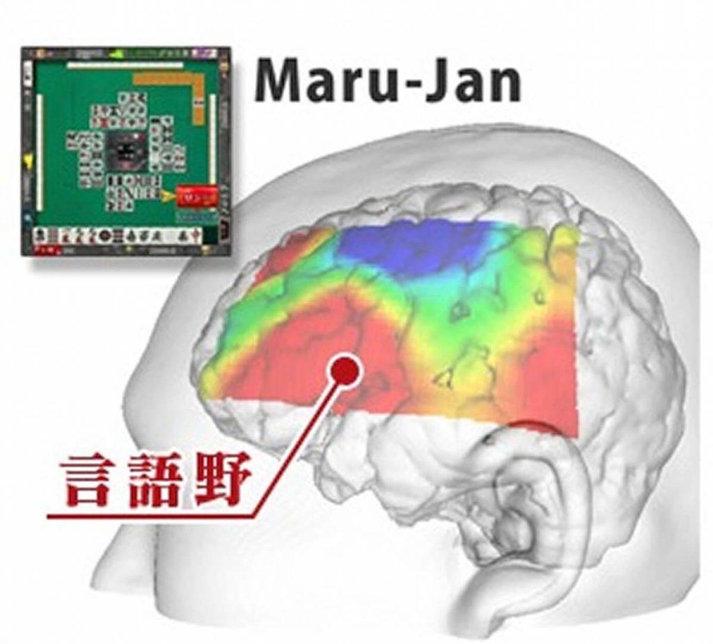 麻雀中の脳の血流の変化
