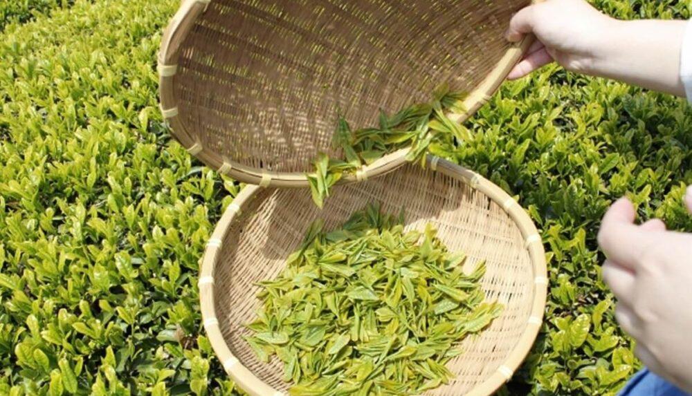国産プーアル茶【茶流痩々】痩せるダイエット茶の体験・口コミ