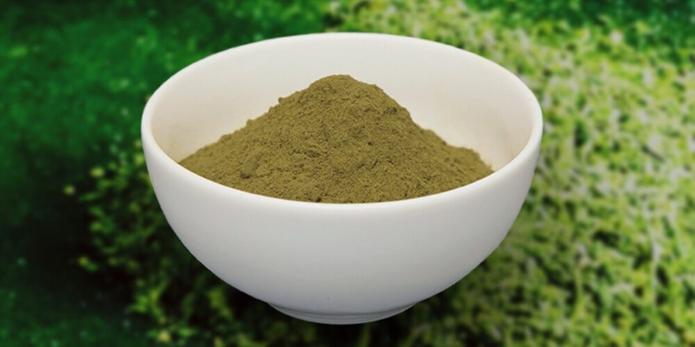 山英乳酸発酵茶の粉